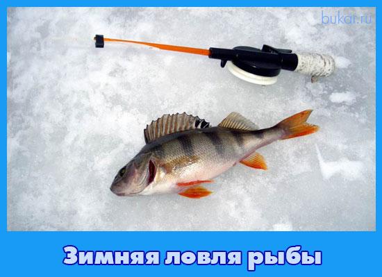 Zimnjaja lovlja ryby