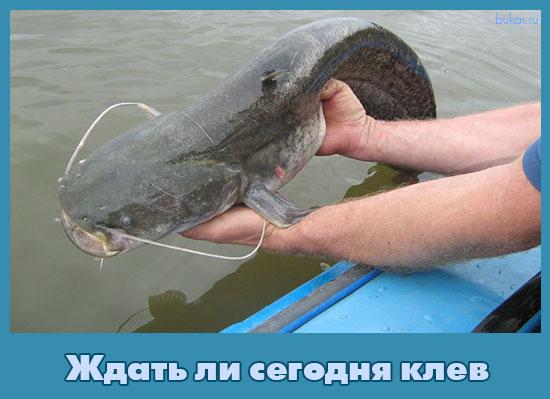 секрет рыболова в сом