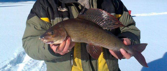 Описание рыбы пескарь и особенностей его ловли