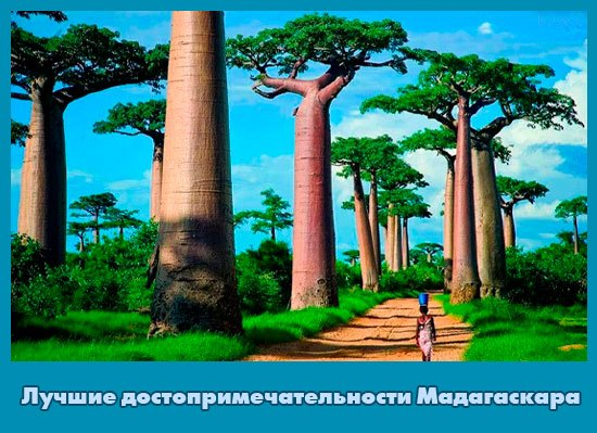 Уникальный Мадагаскар